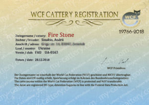 """Cattery """"Fire Stone"""" WCF. Maine Coon, Sphynx, Bambino, Elf."""