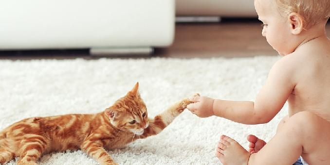 How to teach a child to play with a cat?