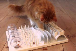 how-to-entertain-a-cat-and-how-to-help-it-not-to-be-bored-at-home
