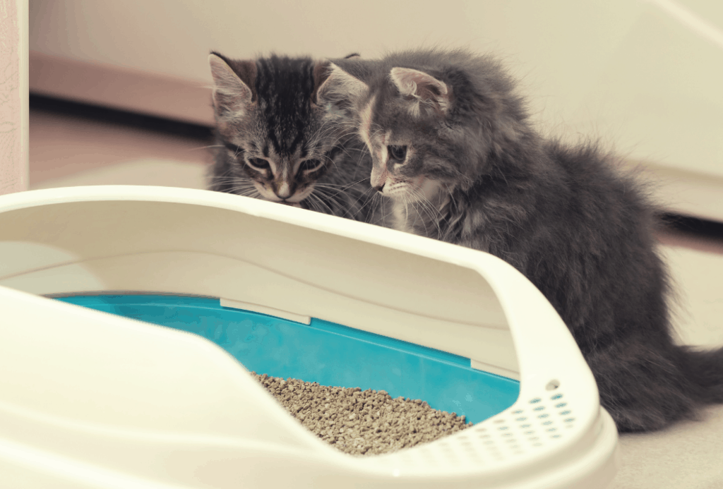 How to teach a kitten to the tray