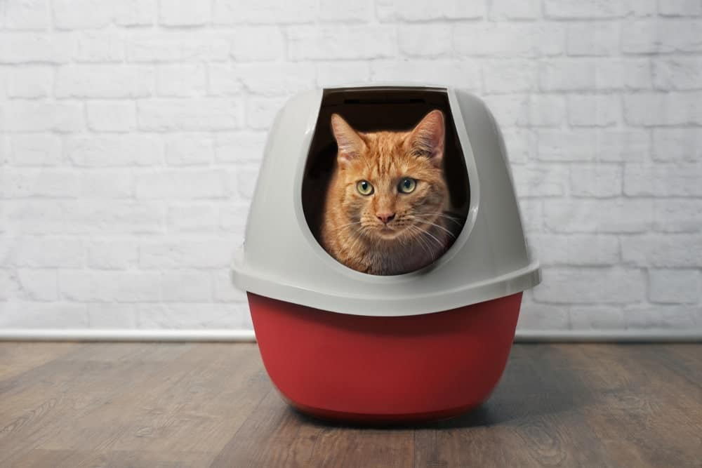 The right cat toilet