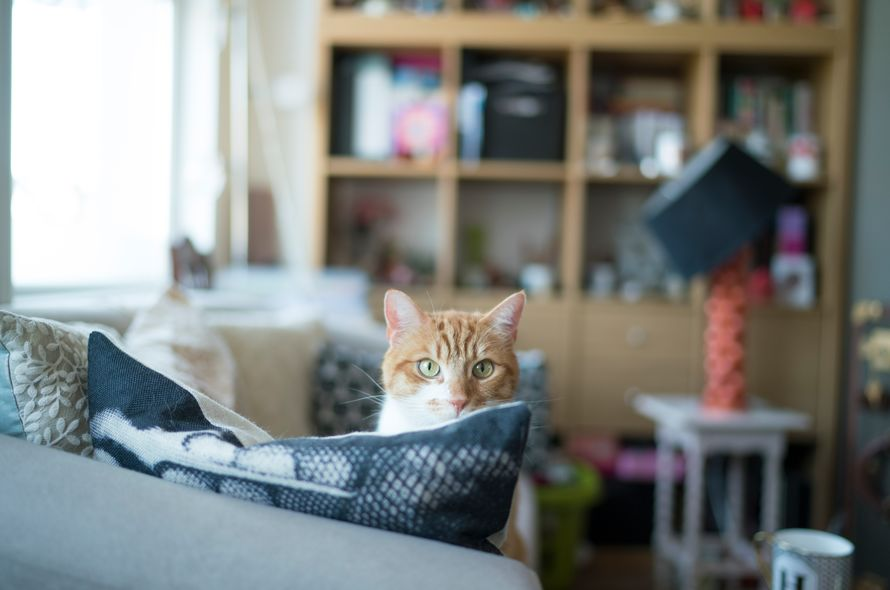 Where to leave the cat for the rest period