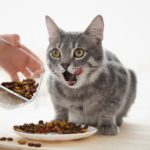 The difference between economy and premium cat food
