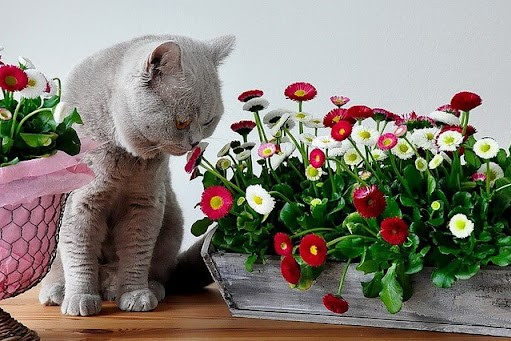 Attention: flower! Or what indoor plants are dangerous for cats