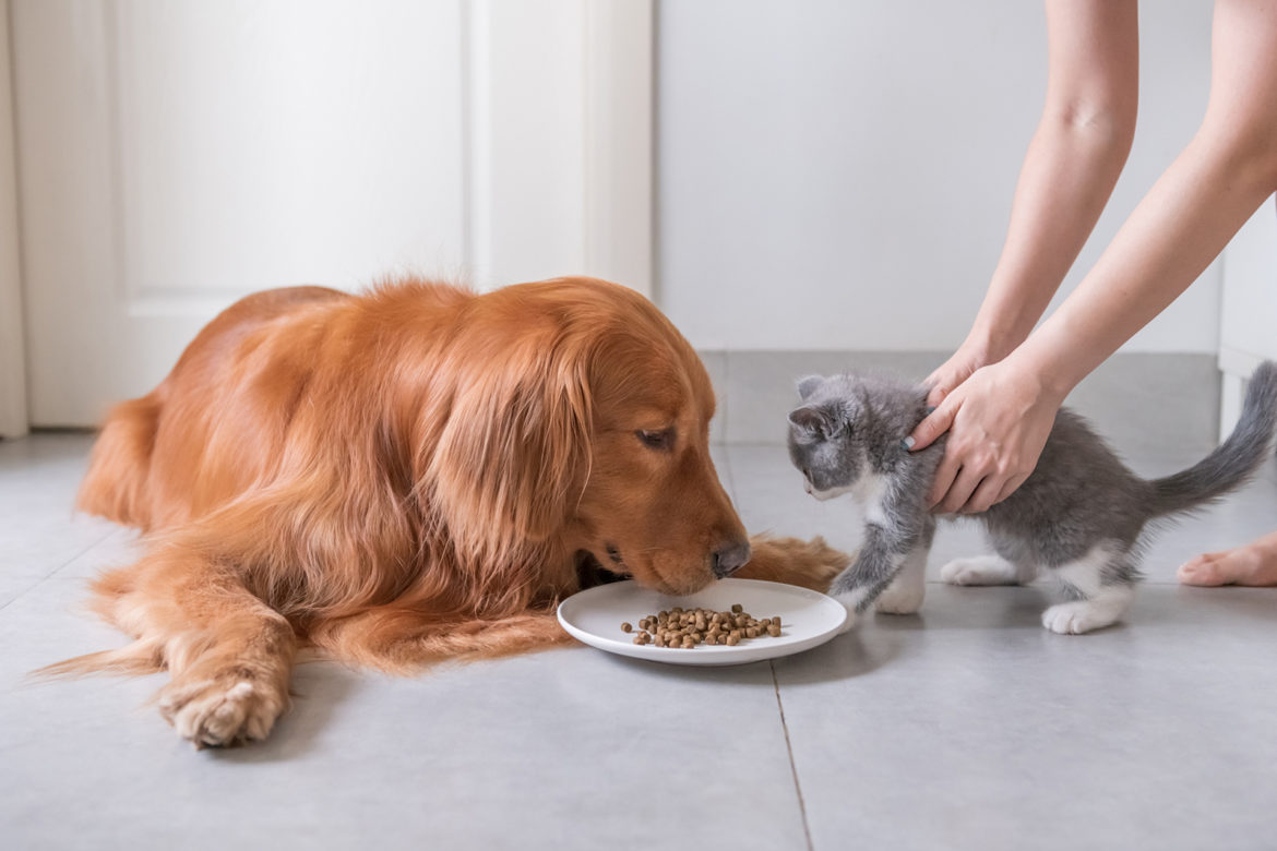 Is it possible to feed a cat with dog food