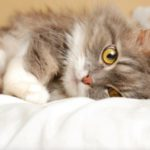 Emergency cat care for diseases and injuries